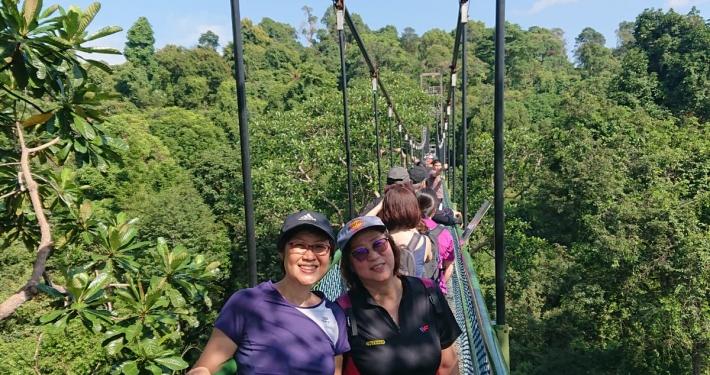 MacRitchie Reservoir TreeTop Walk 2019